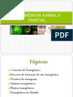 Transgênicos Animal e Vegetal