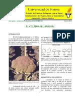 BROCOLI-DAG-HORT-010.pdf