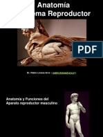 Anatomia Reproductor MORFO 2015