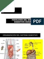 Sistema Digestivo Sétimos 2019