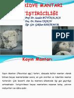İstiridye Mantarı Yetiştiriciliği.pdf