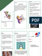 Tripticos Regionalizacion (Recuperado Automáticamente) (1)