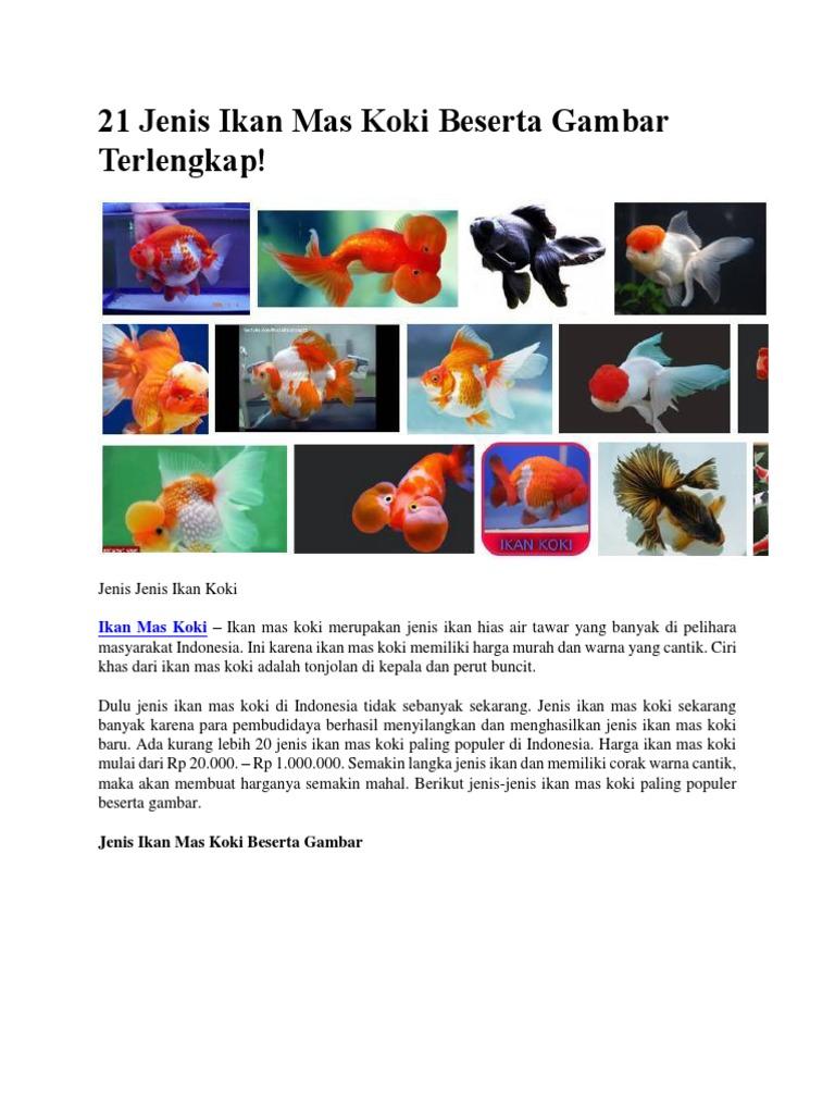 1552938948?v=1 - Jenis Jenis Ikan Koki Dan Harganya
