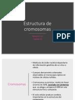 4. Estructura de Cromosomas
