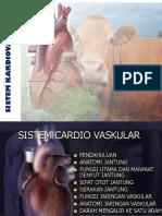 7. Sistem Cardio Vascular
