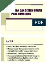 Organ Dan Sistem Organ Pada Tumbuhan