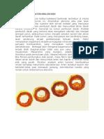 76257384-PATOFISIOLOGI-ATEROSKLEROSIS.docx