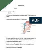 Guia para estudio anato.docx
