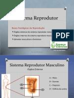 1-Sistema reprodutor-anatomia.ppsx