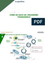 4BG_04_organismo_transgeni.ppt