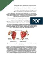 Anatomía Del Manguito Rotador y Del Músculo Supraespinoso