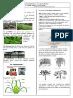 Resumo e Atividade Sobre as Plantas