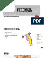 TRONCO CEREBRAL1