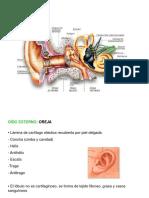 Anatomia Oi Do