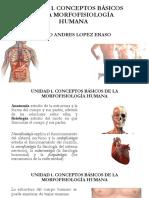 UNIDAD 1 Introducción a La Morfofisiología Humana