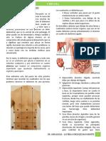 1.- Abdomen Agudo - Dr. Arriagada 1.docx