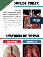 Anatomia Tomografica TX.pptx