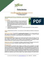 Ficha tecnica de parasitoide de chanchito blanco