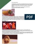 Las 7 tradiciones y costumbres de Perú más representativas.docx