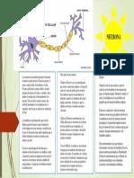 Las neuronas