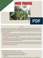 Tema 2 El Nucleo