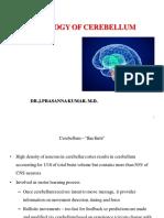 Cerebellum Mbbs