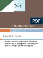 cmarapulpar-140605012409-phpapp01