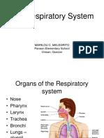 Respiratory System Ppt