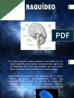 nociones básicas de neuroanatomía cerebral
