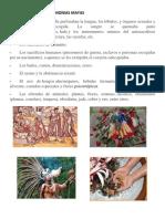 ELEMENTOS DE LAS CEREMONIAS MAYAS.docx