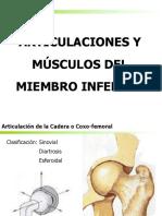 ARTICULACIONES Y MÚSCULOS DEL MIEMBRO INFERIOR