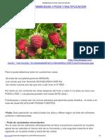 Frambuesas Poda y Multiplicacion.pptx