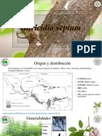 Gliricidia sepium