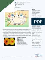 Acidithiobacillus ferrooxidans