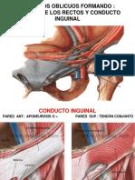 Clase Anatomía Pared Abdominal