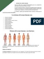 SISTEMAS DEL CUERPO HUMANO.docx