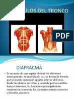 Musculos Del Tronco Anatomia