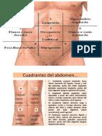abdomen.docx