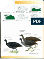aves mitú
