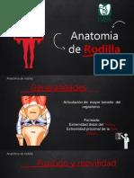 Anatomia de Rodilla LV