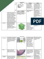 clasificación de tejidos vegetales 2.docx