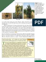 Better Crops International 2001-2 p13