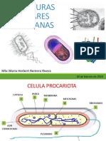 Clase 1 Microbiología Sanitaria