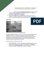 tunel parte 2.docx