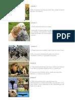 10 derechos de los animales.docx