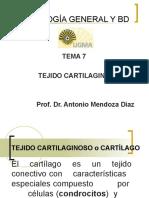 7- TEJIDO CARTILAGINOSO.ppt