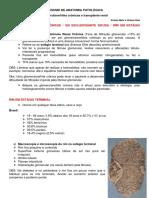 Glomerulonefrites Crônicas e Transplante Renal