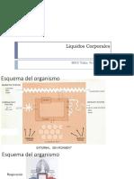 EFA2 - Liquidos Corporales 2019-1