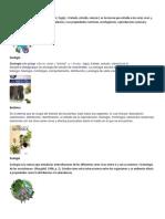 Biología y periodos de los mayas.docx