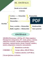 Tema_10._Funciones_Superiores_del_Encefalo_OCW.pdf